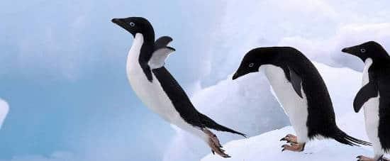 penguin 4 google